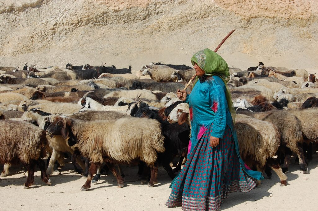 A Baktiari woman drives a flock of sheep and goats, Fars Province.